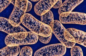 Supports Mitochondrial Function
